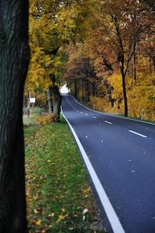 Route dans la forêt, automne