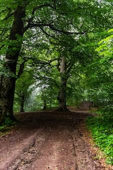 La route dans la forêt d'été