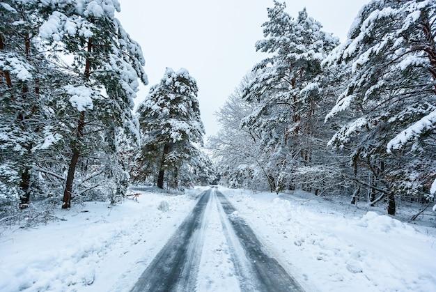 La route dans la forêt d'hiver avec de hauts pins, des arbres enneigés. forêt de fées d'hiver couverte de neige