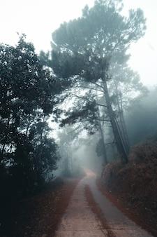 La route dans la forêt le matin, dans la forêt froide et brumeuse