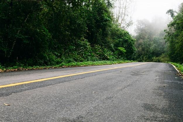 Route dans la forêt de la nature et la route brumeuse de la forêt tropicale.