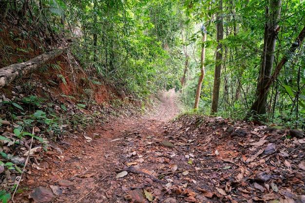 Route dans la forêt pour voyager en voiture tout-terrain dans la nature.