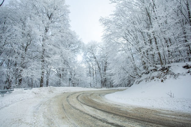 Route dans la forêt de sabaduri avec de la neige couverte. heure d'hiver. paysage