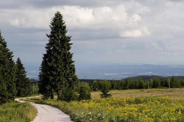 Route dans la forêt de sapins