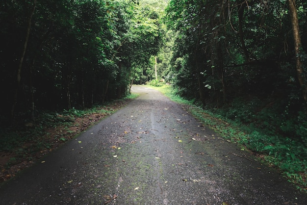 La route dans la forêt avec le thème fané