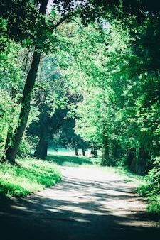 Route dans le parc forestier au printemps