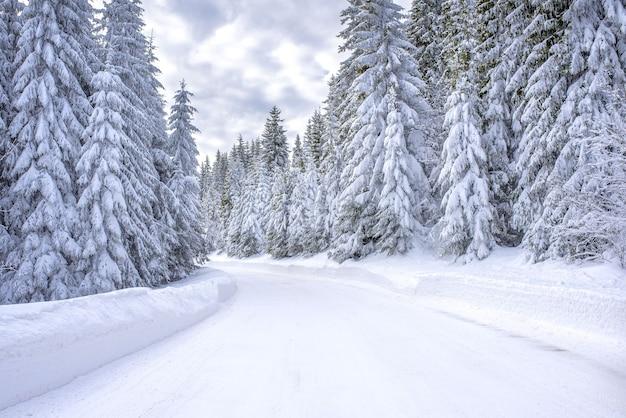Route dans une station de ski de montagne entourée de sapins