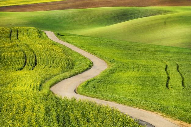 Route dans les vagues de champ vert