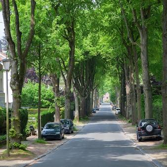 Route dans une ville avec une rangée d'arbres qui couvrent complètement le ciel et des voitures en stationnement