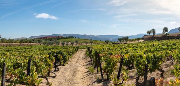 Route entre les champs plantés de vignes
