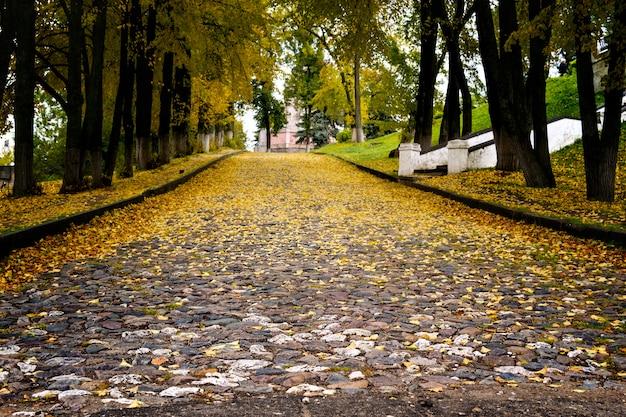 Route faite de pavés recouverts de feuilles jaunes tirées à angle faible.