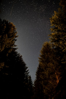 Route forestière des arbres à feuilles persistantes et ciel avec étoiles