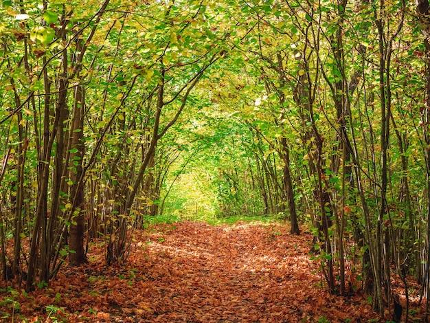 Route forestière d'automne sous la voûte des arbres fermant le ciel.