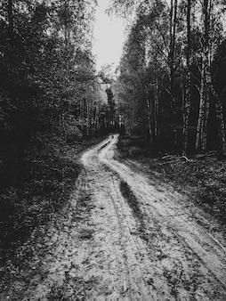 Route forestière boueuse entourée de grands arbres en noir et blanc