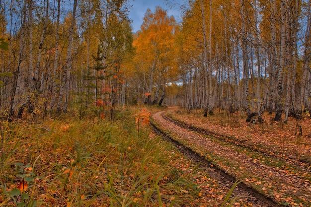 Route forestière. forêt d'automne, bouleaux à feuilles jaunes, ciel nuageux. paysage d'automne. feuilles rouges et jaunes sur la route