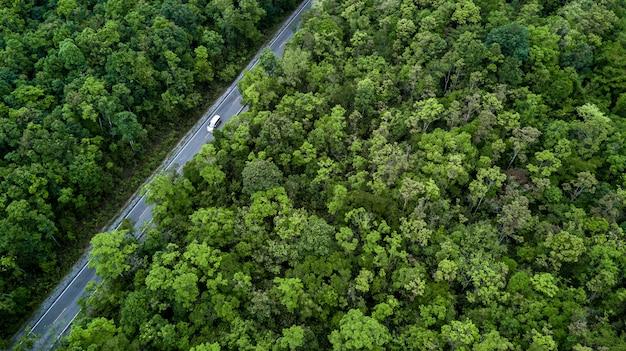 Route forestière traversant la forêt