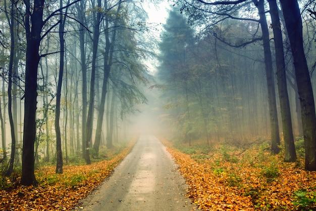 Route et forêt brumeuse en automne avec un feuillage coloré.