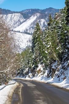 Route en forêt dans les montagnes du caucase. neige d'hiver et pins