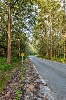 La route, la forêt de teck et la lumière du matin