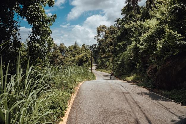 Route avec la forêt tropicale au brésil