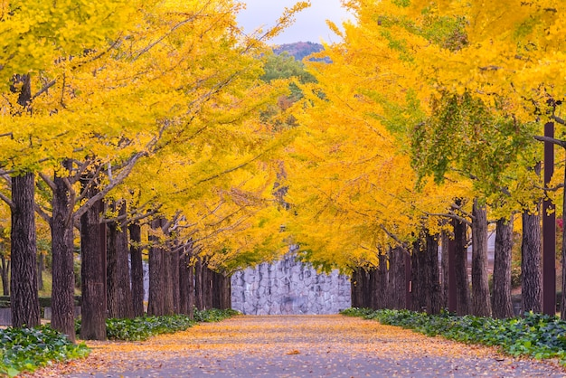 Route ginkgo