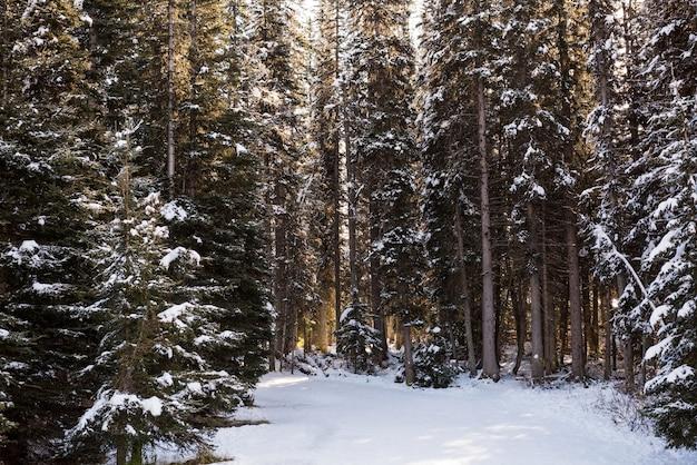 Route glacée entre des rangées d'arbres enneigés