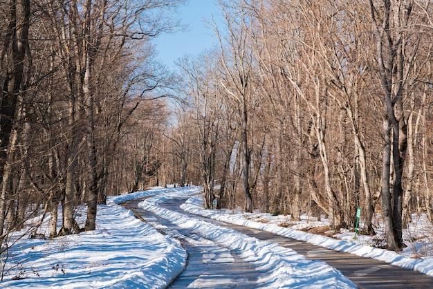 Route goudronnée couverte de neige en forêt