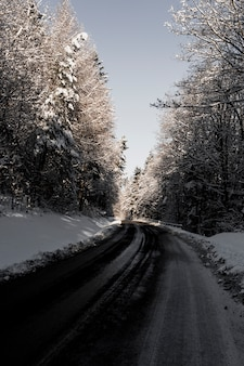 Route goudronnée dans les bois d'hiver