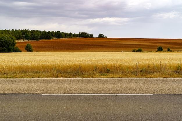 Route goudronnée dans la campagne rurale avec plantation de céréales.