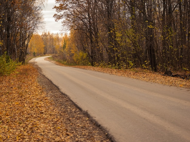Route goudronnée dans une forêt d'automne colorée.