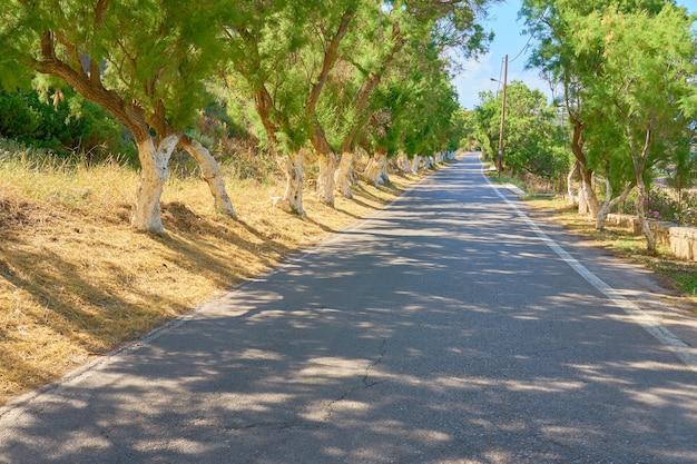 Route goudronnée avec des ombres sur l'île de crète lors d'une journée ensoleillée.