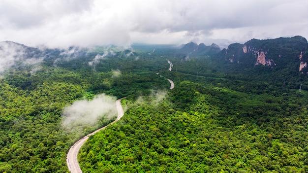 Route à grand angle avec forêt naturelle et brouillard.