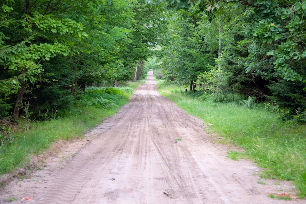 Route de gravier et de sable dans la forêt de pins - perspective décroissante.