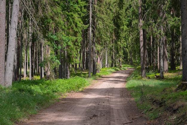 Route de gravier et de sable dans la forêt de pins.