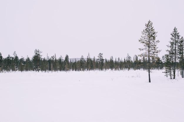 Route d'hiver et arbres avec neige et paysage des alpes