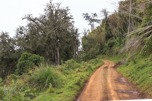 Route jaune dans la forêt paysage aberdare kenya afrique