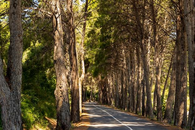 Route marécageuse de guadalest avec des pins sur les bords.