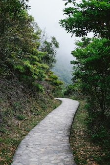 Route menant aux forêts tropicales