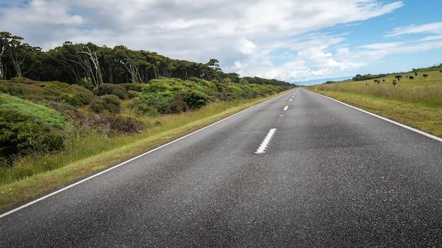 Route menant à la distance inclinée pendant la journée ensoleillée sur la région de la côte ouest de la nouvelle-zélande