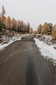 Route de montagne à travers les bois de mélèzes et de sapins en hiver