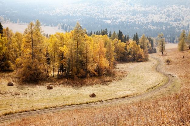 Route parmi les montagnes de l'altaï. l'automne