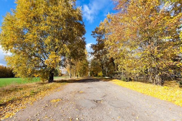 Route pavée avec des arbres, les feuilles des arbres tombent sur la route à l'automne
