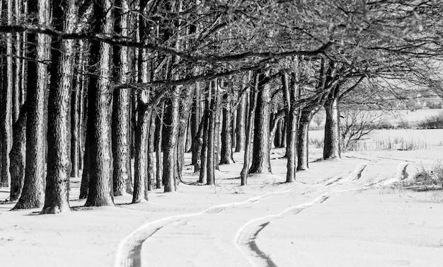 Route à la périphérie d'une forêt d'hiver. image en noir et blanc_