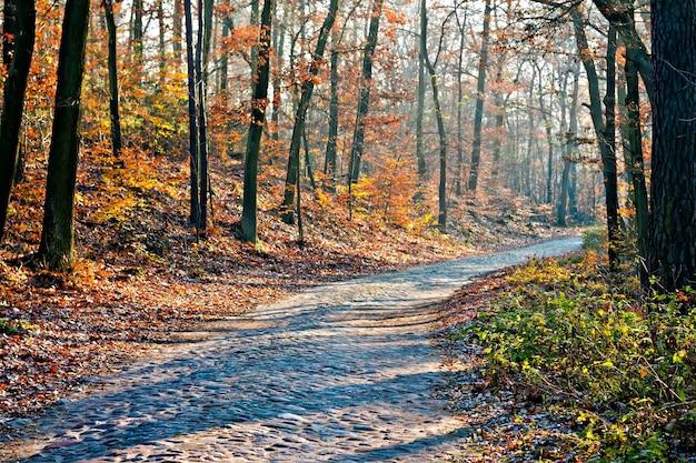Route pittoresque de la forêt d'automne à la journée ensoleillée