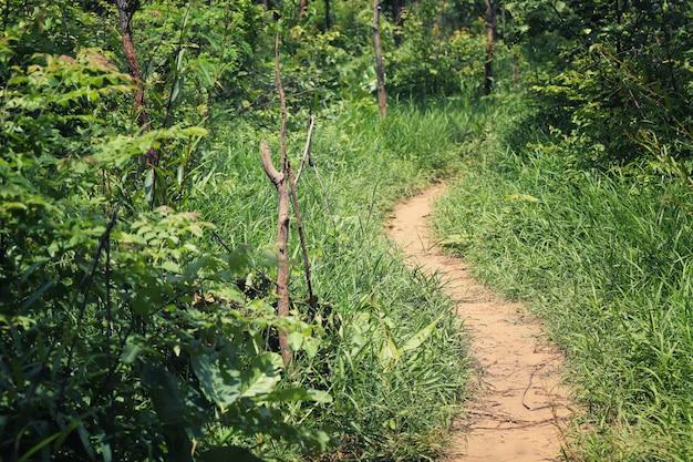Route rurale vers la forêt avec des arbres.