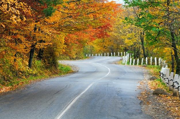 Route secondaire sinueuse d'automne dans la forêt de montagne