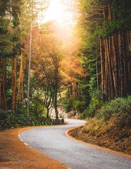 Route secondaire sinueuse dans une forêt en automne tons vert et or photo verticale