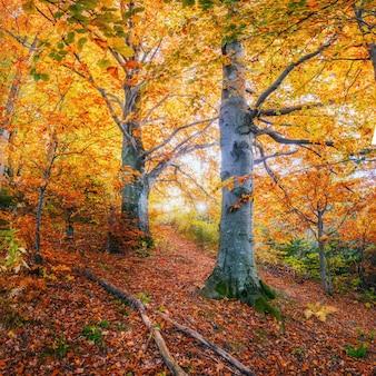 Route sinueuse dans le paysage d'automne