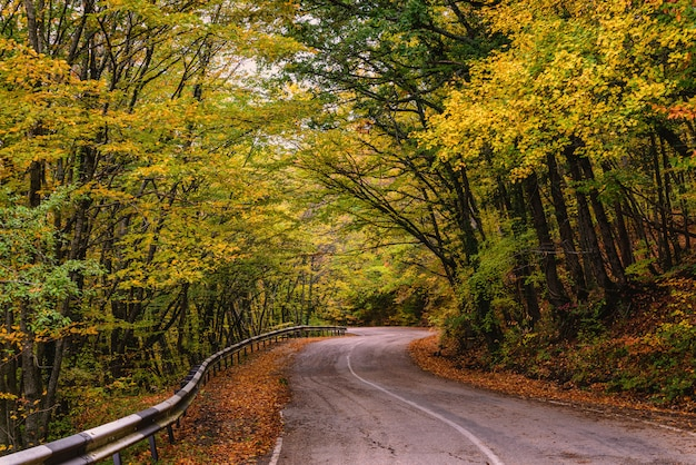 Route sinueuse à travers les arbres d'automne