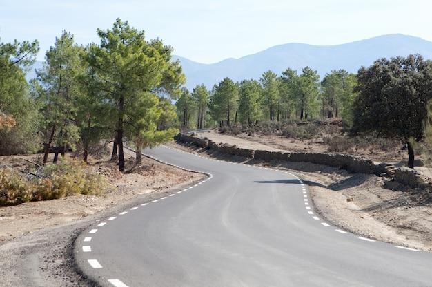 Route solitaire au milieu d'une pinède sur la montagne